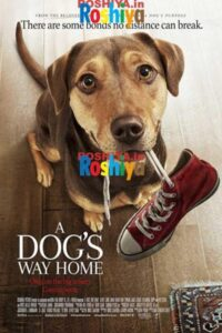Download A Dog's Way Home 2019 480p – 720p – 1080p Hindi – English Dual Audio BluRay
